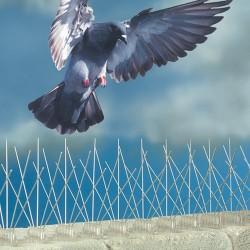 Kolce przeciw ptakom 50cm.